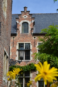 A historical building in Belgium in Leuven with a yellow flower in the foreground