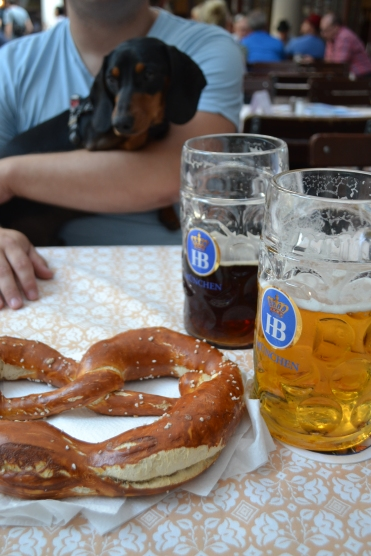 Beers in Munich with a pretzel on the table with a man in the background and a dog in his lap dachshund german dog hofbrau