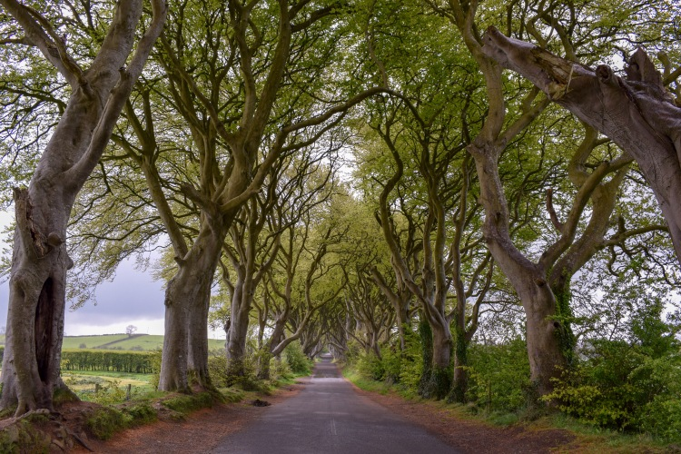 Landscape Photo of the Dark Hedges in Northern Ireland Game of Thrones Location